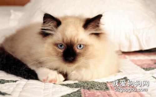小猫球虫病有什么症状图片