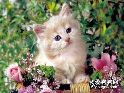 【养猫知识】关于猫癣的一些小知识