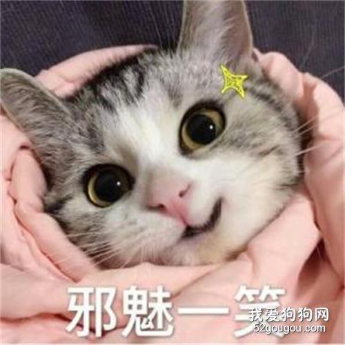 浅谈猫咪的口腔溃疡_猫咪嘴巴口腔溃疡_猫咪口腔溃疡图片