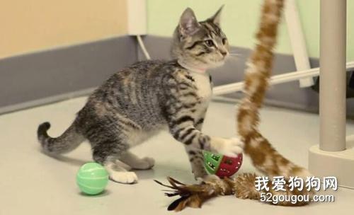 猫咪小运动轻松练起来_怎么训练九个月的猫坐下_怎么教猫咪拜拜的动作