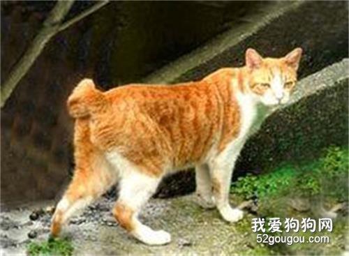 麒麟猫白色图片