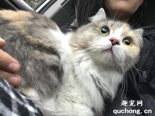 猫咪怕生人:该怎么办,要怎么训练?